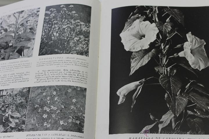 Libros de segunda mano: HISTORIA NATURAL BOTANICA,Nº 26 INTITUTO GALLACH BARCELONA - Foto 2 - 44444869