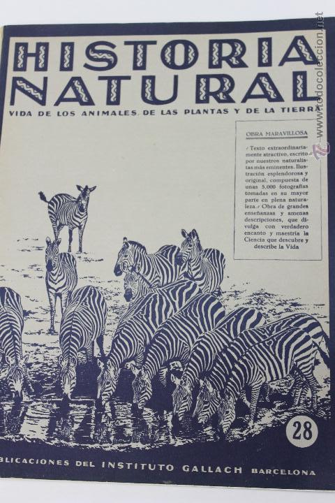 HISTORIA NATURAL BOTANICA,Nº 28 INSTITUTO GALLACH BARCELONA (Libros de Segunda Mano - Ciencias, Manuales y Oficios - Biología y Botánica)
