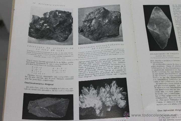 Libros de segunda mano: HISTORIA NATURAL BOTANICA,Nº 28 INSTITUTO GALLACH BARCELONA - Foto 2 - 44444953