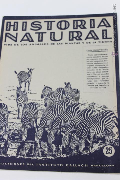 HISTORIA NATURAL BOTANICA Nº 25 INSTITUTO GALLACH BARCELONA (Libros de Segunda Mano - Ciencias, Manuales y Oficios - Biología y Botánica)