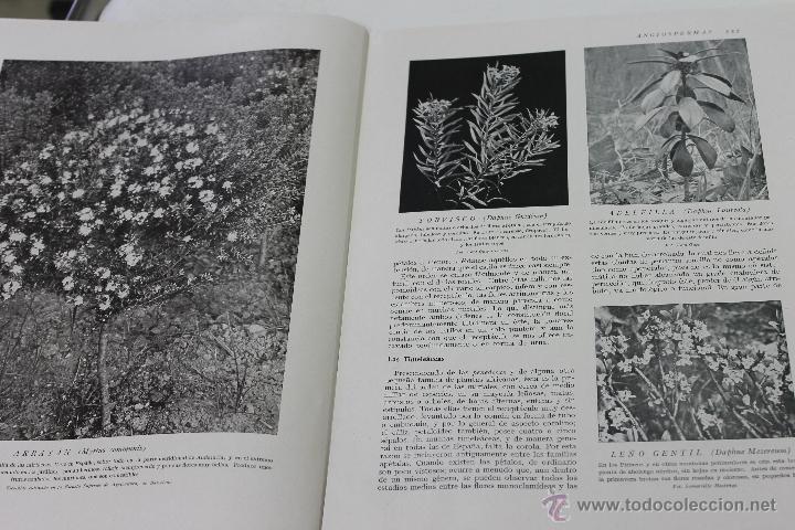 Libros de segunda mano: HISTORIA NATURAL BOTANICA Nº 25 INSTITUTO GALLACH BARCELONA - Foto 2 - 44445130