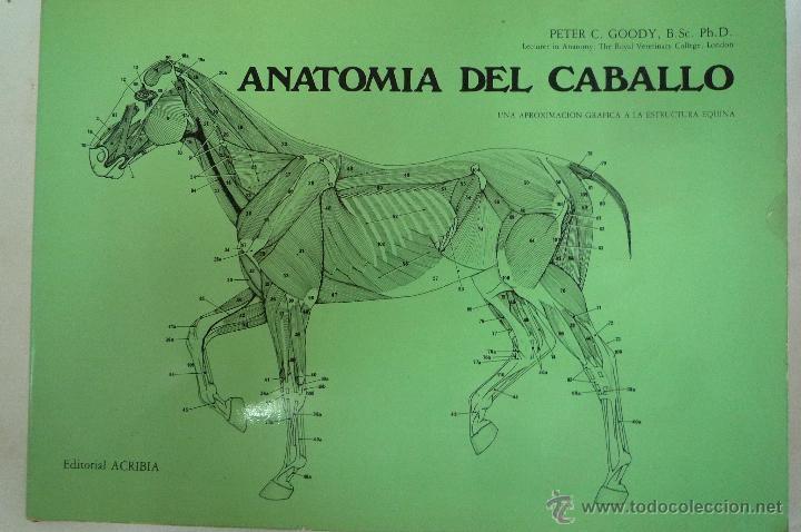 l- 1323. anatomia del caballo. una aproximacion - Comprar Libros de ...