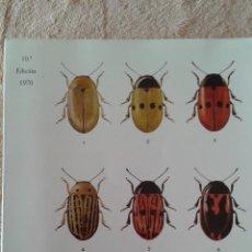 Libros de segunda mano: BIOLOGIA GENERAL II ALVARADO. Lote 47181324