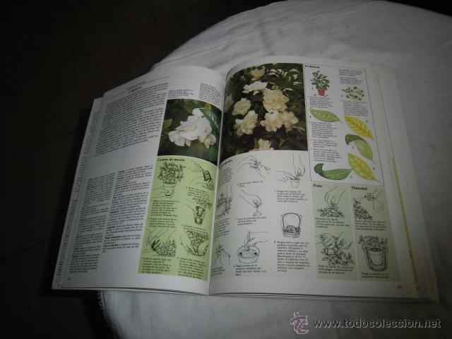 Libros de segunda mano: EL CUIDADO DE LAS PLANTAS DE INTERIOR GUIA PRACTICA ILUSTRADA.EDITORIAL BLUME 1982 - Foto 3 - 47866534