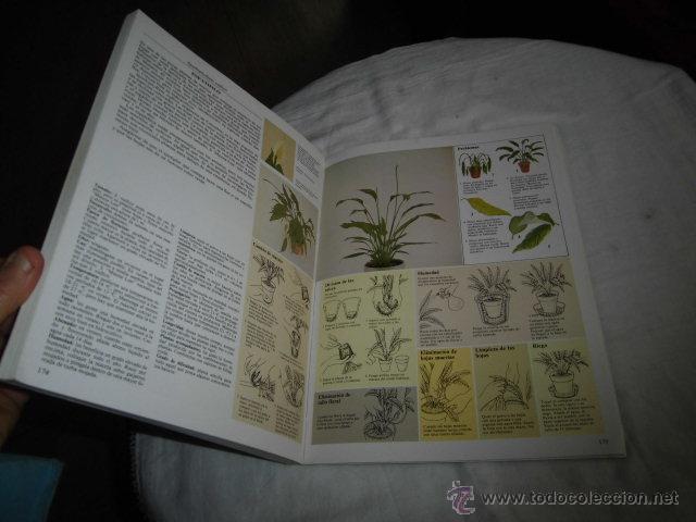 Libros de segunda mano: EL CUIDADO DE LAS PLANTAS DE INTERIOR GUIA PRACTICA ILUSTRADA.EDITORIAL BLUME 1982 - Foto 4 - 47866534