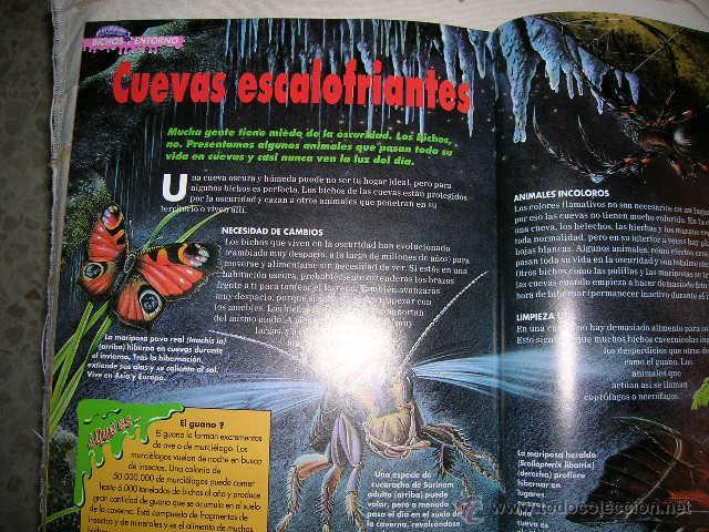 Libros de segunda mano: Bichos. Descubre el fascinante mundo de los minimonstruos. Planeta DeAgostini. Fasciculo 4 Mantis - Foto 2 - 49672823