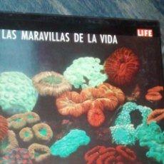 Libros de segunda mano: LAS MARAVILLAS DE LA VIDA (LIFE) / VARIOS AUTORES / 1ª EDICION / 1964 / GRAN FORMATO. Lote 49765057