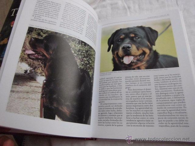 Libros de segunda mano: LA ENCICLOPEDIA DEL ROTTWEILER.DOMENICO MOSCATELLI,MARINA SALMOIRAGHI.EDIT.DE VECCHI 2005 - Foto 3 - 50217575
