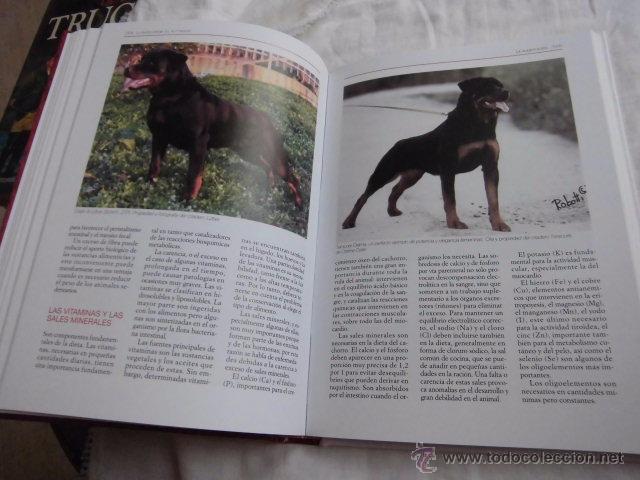 Libros de segunda mano: LA ENCICLOPEDIA DEL ROTTWEILER.DOMENICO MOSCATELLI,MARINA SALMOIRAGHI.EDIT.DE VECCHI 2005 - Foto 4 - 50217575