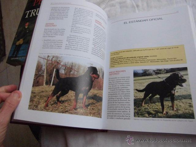 Libros de segunda mano: LA ENCICLOPEDIA DEL ROTTWEILER.DOMENICO MOSCATELLI,MARINA SALMOIRAGHI.EDIT.DE VECCHI 2005 - Foto 6 - 50217575