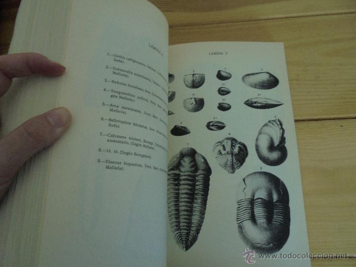 Libros de segunda mano: INSTITUTO GEOLOGICO Y MINERO DE ESPAÑA 7 TOMOS. MAPA GEOLOGICO DE ESPAÑA HOJA DE CANTILLANA. VER FOT - Foto 24 - 50677268