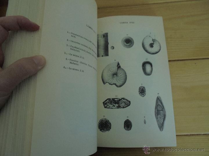 Libros de segunda mano: INSTITUTO GEOLOGICO Y MINERO DE ESPAÑA 7 TOMOS. MAPA GEOLOGICO DE ESPAÑA HOJA DE CANTILLANA. VER FOT - Foto 25 - 50677268