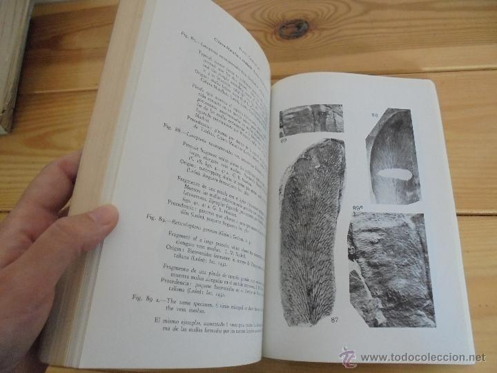 Libros de segunda mano: INSTITUTO GEOLOGICO Y MINERO DE ESPAÑA 7 TOMOS. MAPA GEOLOGICO DE ESPAÑA HOJA DE CANTILLANA. VER FOT - Foto 101 - 50677268