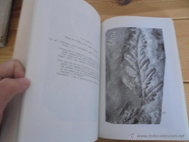 Libros de segunda mano: INSTITUTO GEOLOGICO Y MINERO DE ESPAÑA 7 TOMOS. MAPA GEOLOGICO DE ESPAÑA HOJA DE CANTILLANA. VER FOT - Foto 123 - 50677268