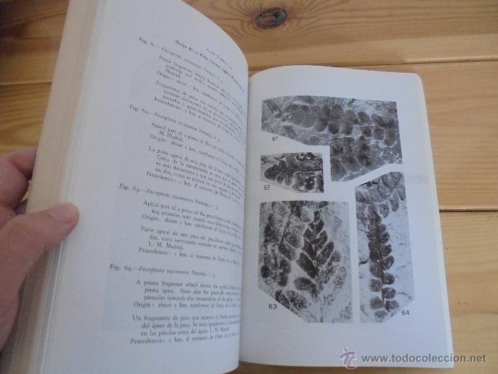 Libros de segunda mano: INSTITUTO GEOLOGICO Y MINERO DE ESPAÑA 7 TOMOS. MAPA GEOLOGICO DE ESPAÑA HOJA DE CANTILLANA. VER FOT - Foto 124 - 50677268