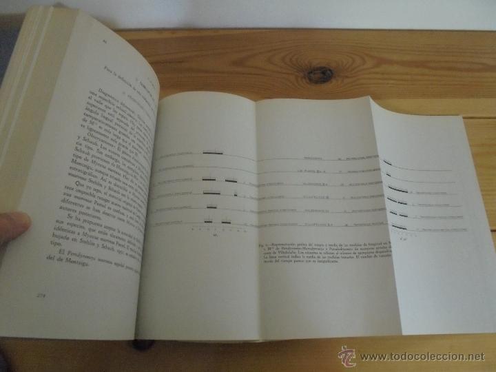 Libros de segunda mano: INSTITUTO GEOLOGICO Y MINERO DE ESPAÑA 7 TOMOS. MAPA GEOLOGICO DE ESPAÑA HOJA DE CANTILLANA. VER FOT - Foto 138 - 50677268
