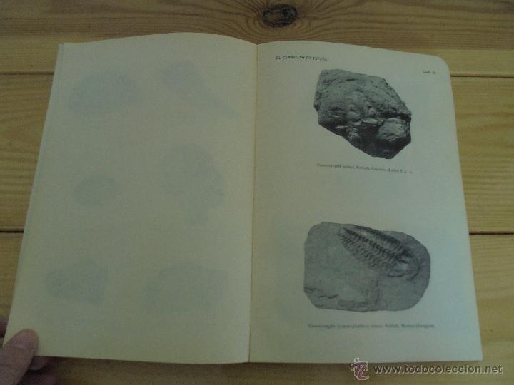 Libros de segunda mano: INSTITUTO GEOLOGICO Y MINERO DE ESPAÑA 7 TOMOS. MAPA GEOLOGICO DE ESPAÑA HOJA DE CANTILLANA. VER FOT - Foto 154 - 50677268