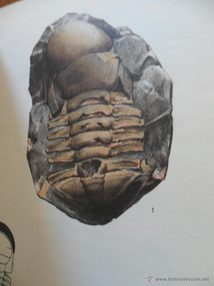 Libros de segunda mano: Fossiles. Rudolff Prokop. Ed. Gründ 1981 - Foto 2 - 50822389