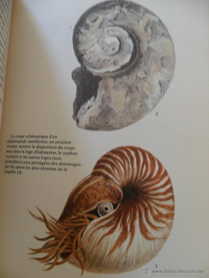Libros de segunda mano: Fossiles. Rudolff Prokop. Ed. Gründ 1981 - Foto 4 - 50822389