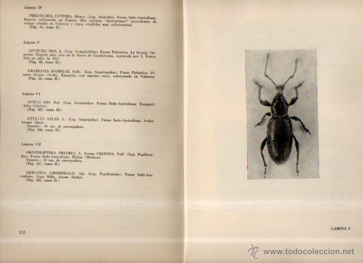 Libros de segunda mano: Catálogo de la Colección Entomológica Torres Sala de coleópters y lepidopteros de todo el mundo. T 2 - Foto 2 - 51493816