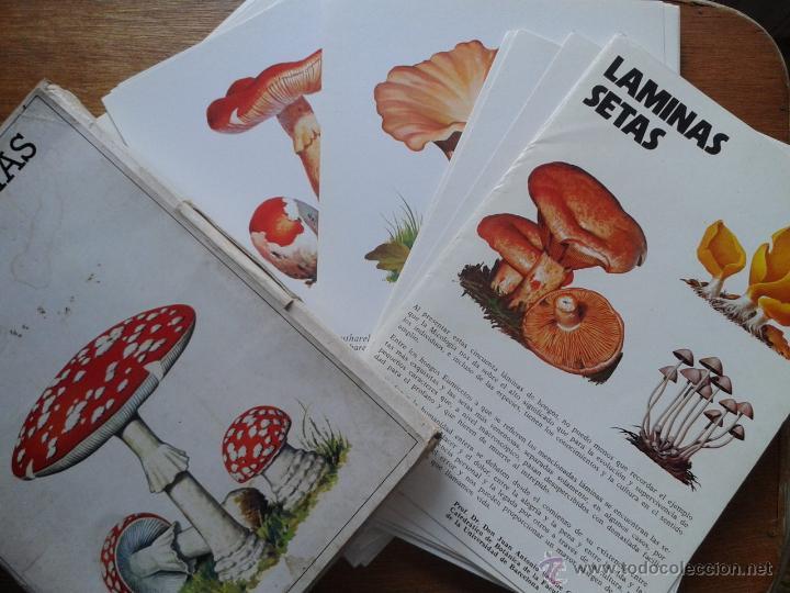 LAMINAS DE SETAS, JUAN ANTONIO SEOANE CAMBA, LABORATORIO EMYFAR, 1976 (Libros de Segunda Mano - Ciencias, Manuales y Oficios - Biología y Botánica)