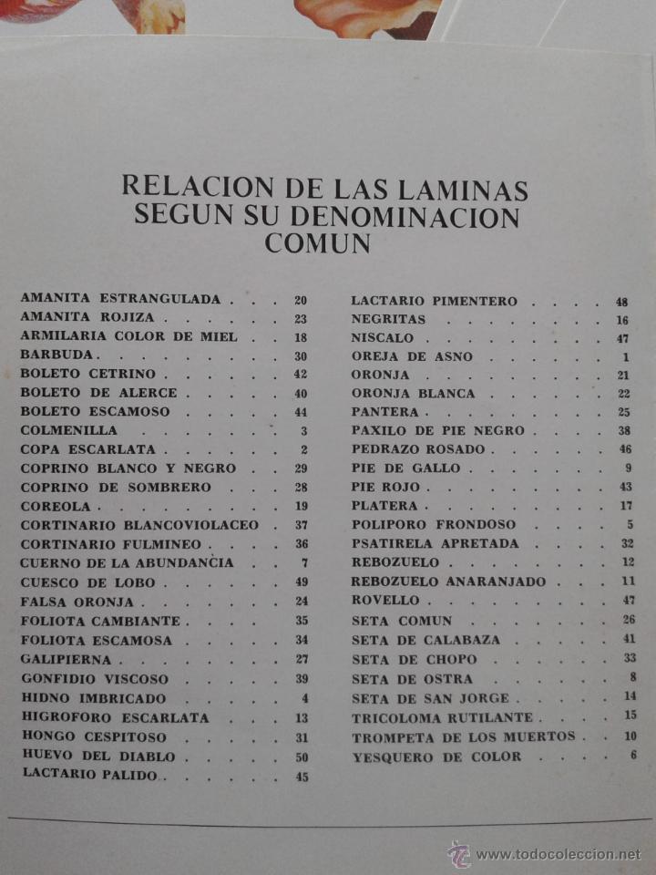 Libros de segunda mano: LAMINAS DE SETAS, JUAN ANTONIO SEOANE CAMBA, LABORATORIO EMYFAR, 1976 - Foto 2 - 52772173
