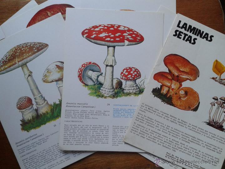 Libros de segunda mano: LAMINAS DE SETAS, JUAN ANTONIO SEOANE CAMBA, LABORATORIO EMYFAR, 1976 - Foto 3 - 52772211