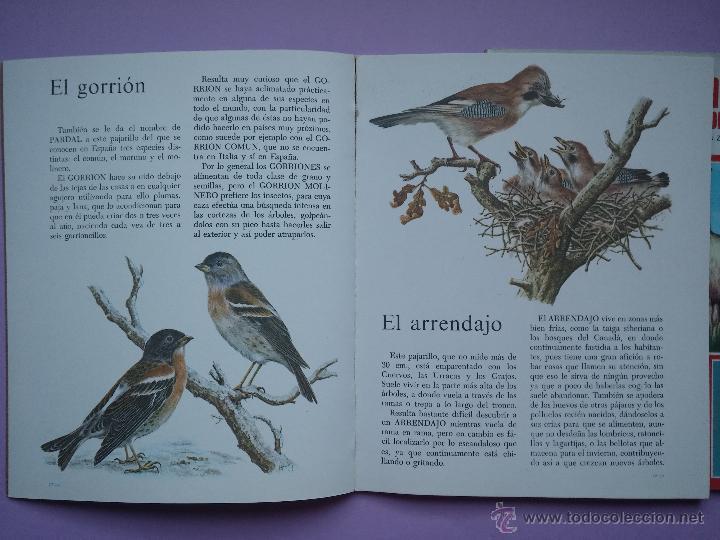 Libros de segunda mano: LOTE DE 3 LIBROS COLECCION GRAN ZOO, AVES, FAUNA SALVAJE Y FAUNA VARIADA, EDITORIAL ROMA,1980 - Foto 4 - 53119559