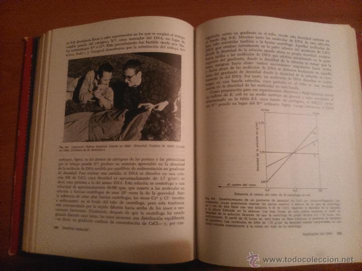 Libros de segunda mano: Genética Molecular Gunther S. Stent. - Foto 5 - 53241062