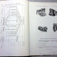 Libros de segunda mano: NUEVOS CARNIVOROS DEL VINDOBONIENSE DE LA CUENCA DEL VALLÉS - PANADÉS. 1944. I. GEOLÓGICO Y MINERO. Lote 53991763