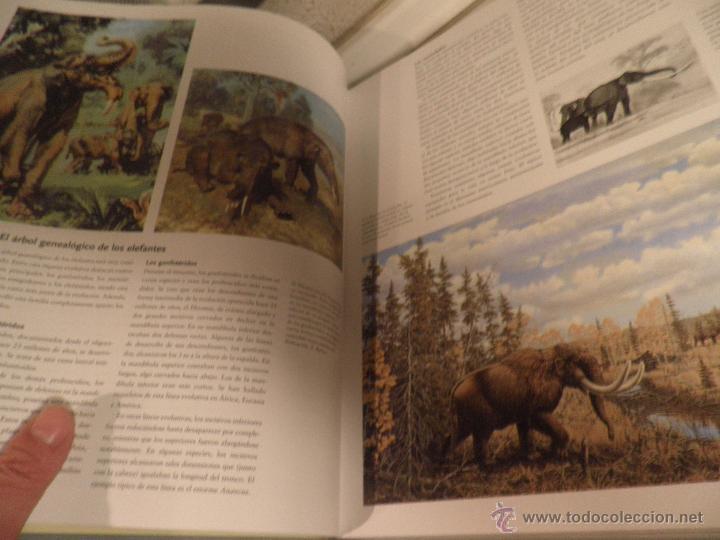 el elefante en la naturaleza y en la historia d - Comprar Libros de ...