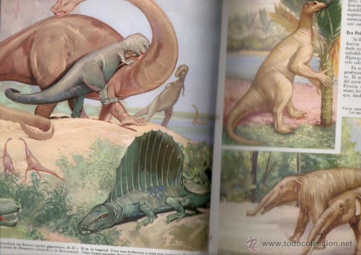 Libros de segunda mano: PUIG / SIMON : GEOLOGÍA Y ASTRONOMÍA (LA NATURALEZA IV, JOVER, 1970) MUY ILUSTRADO EN COLOR - Foto 3 - 54055827
