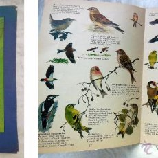Libros de segunda mano: THE BIRDS IN YOUR GARDEN. 1980. THE ROYAL SOCIETY FOR THE PROTECTION OF BIRDS. Lote 54517297