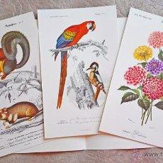 Libros de segunda mano: LOTE 3 LÁMINAS ILUSTRADAS PLANTAS Y ANIMALES ATLAS HISTORIA NATURAL CHARLES ORBIGNY READER'S DIGEST. Lote 54992028