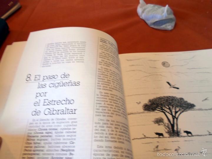 Libros de segunda mano: Hermoso estudio sobre la cigüeña blanca - Foto 4 - 55813387