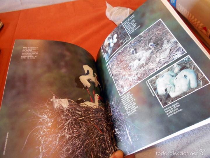 Libros de segunda mano: Hermoso estudio sobre la cigüeña blanca - Foto 10 - 55813387