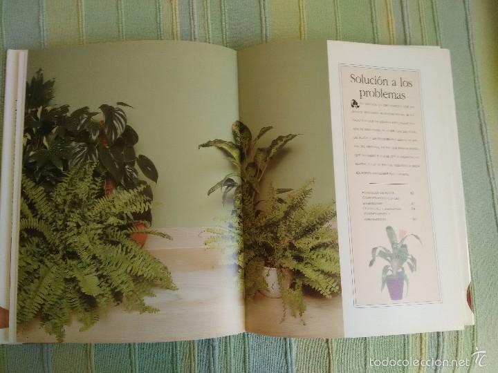 Libros de segunda mano: PLANTAS DE INTERIOR. Peter McHoy. - Foto 4 - 56551440