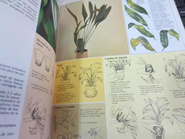 Libros de segunda mano: GUÍA PRÁCTICA ILUSTRADA PARA EL CUIDADO DE LAS PLANTAS DE INTERIOR EDIT BLUME - Foto 2 - 56716380