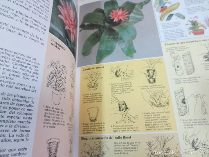 Libros de segunda mano: GUÍA PRÁCTICA ILUSTRADA PARA EL CUIDADO DE LAS PLANTAS DE INTERIOR EDIT BLUME - Foto 3 - 56716380