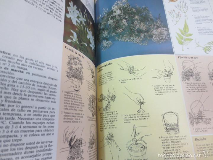 Libros de segunda mano: GUÍA PRÁCTICA ILUSTRADA PARA EL CUIDADO DE LAS PLANTAS DE INTERIOR EDIT BLUME - Foto 4 - 56716380