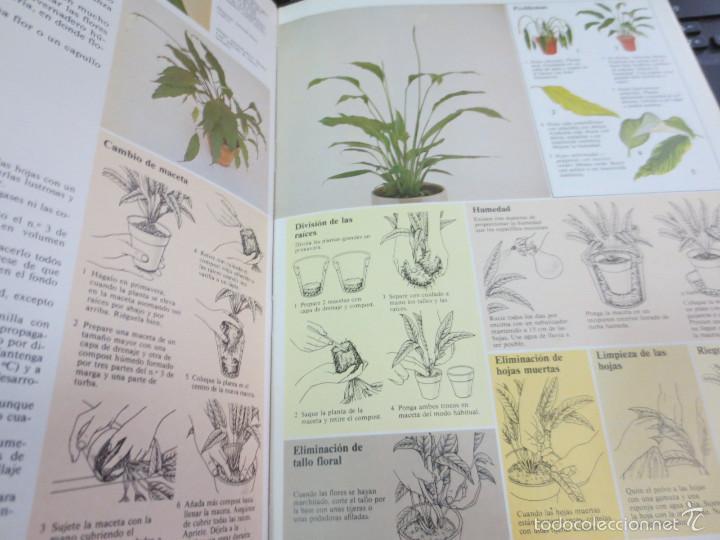 Libros de segunda mano: GUÍA PRÁCTICA ILUSTRADA PARA EL CUIDADO DE LAS PLANTAS DE INTERIOR EDIT BLUME - Foto 5 - 56716380