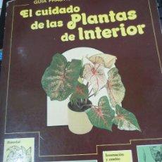 Libros de segunda mano: GUÍA PRÁCTICA ILUSTRADA PARA EL CUIDADO DE LAS PLANTAS DE INTERIOR EDIT BLUME . Lote 56716380
