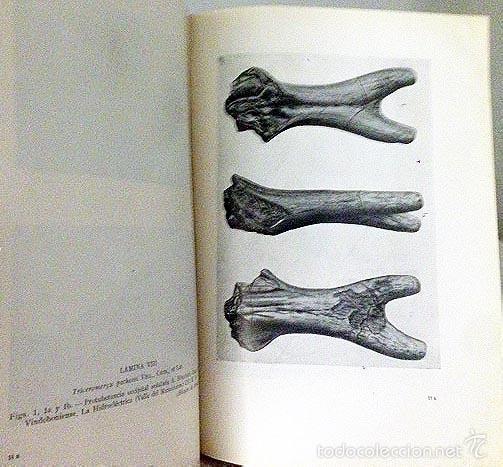 LOS JIRÁFIDOS FÓSILES DE ESPAÑA. (B, 1952) YACIMIENTOS: CUENCAS DE VALLÉS, CALATAYUD-TERUEL, TAJO... (Libros de Segunda Mano - Ciencias, Manuales y Oficios - Paleontología y Geología)