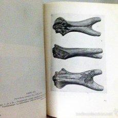 Libros de segunda mano: LOS JIRÁFIDOS FÓSILES DE ESPAÑA. (B, 1952) YACIMIENTOS: CUENCAS DE VALLÉS, CALATAYUD-TERUEL, TAJO.... Lote 57286134