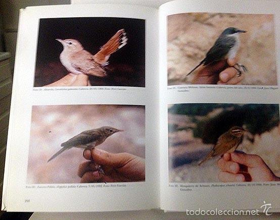 Libros de segunda mano: Las aves del Archipiélago de Cabrera (Islas Baleares) Fotografías a color. Ornitología. Mediterráneo - Foto 2 - 57499926
