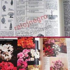 Libros de segunda mano: FLORES EN CASA - ENCICLOPEDIA TOMO 1 - GUÍA LIBRO MUY ILUSTRADO JARDÍN DECORACIÓN PLANTAS JARDINERÍA. Lote 57903544