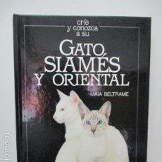 Libros de segunda mano: GATO SIAMES Y ORIENTAL -.MAIA BELTRAME. Lote 58208708
