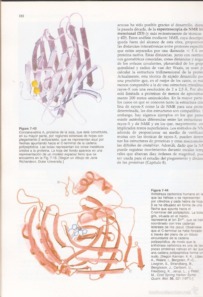 Libros de segunda mano de Ciencias: BIOQUÍMICA - DONALD VOET Y JUDITH G. VOET - EDICIONES OMEGA, Barcelona, 1992. - Foto 4 - 60249727