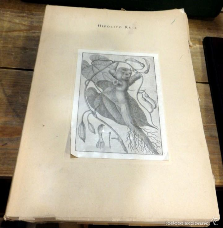 RELACION HISTORICA DEL VIAGE A LOS REYNOS DEL PERU Y CHILE.1777-1788- HIPOLITO RUIZ - 1952 - TOMO 1 (Libros de Segunda Mano - Ciencias, Manuales y Oficios - Biología y Botánica)