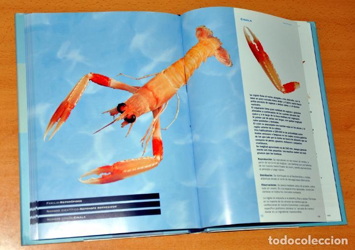 Libros de segunda mano: DETALLE 2. - Foto 3 - 62625356
